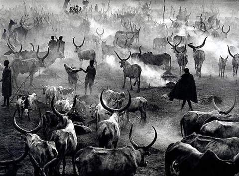 southern sudan [dinka cattle camp of amak at the end of the day when the herd is back in the camp for the night. this is the most active time in the camp] by sebastião salgado